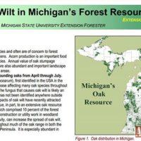 Oak-Wilt-In-Michigan